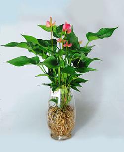 手机版伟德bv客户端桌摆放植物22