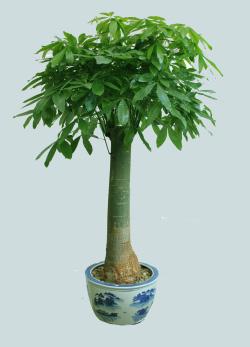 手机版伟德bv客户端桌摆放植物0