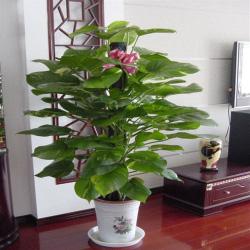 手机版伟德bv客户端桌摆放植物77
