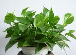 手机版伟德bv客户端桌摆放植物66