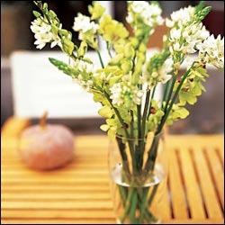 手机版伟德bv客户端桌摆放植物33